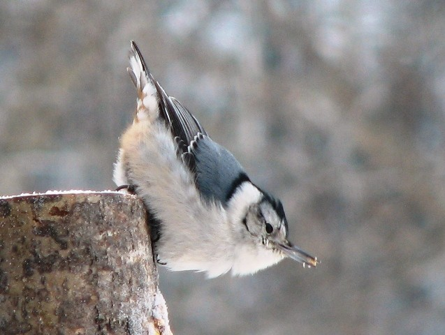 Ornithologie et location de yourte