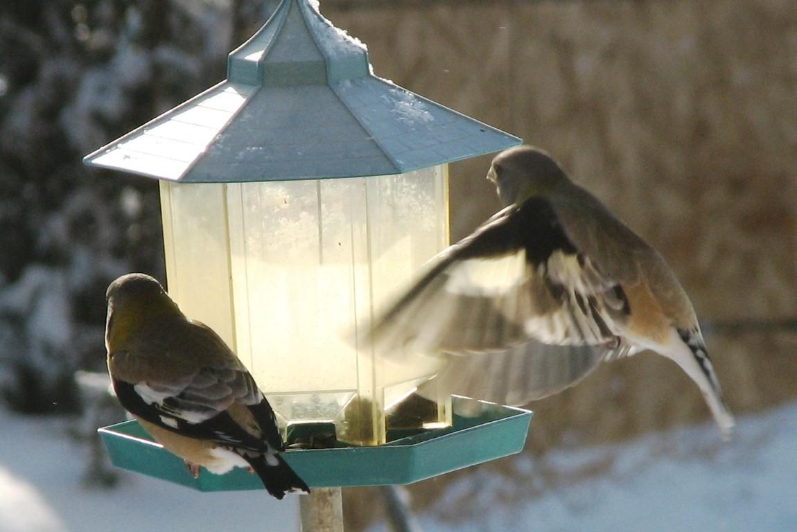 Observation de des oiseaux et location de yourte