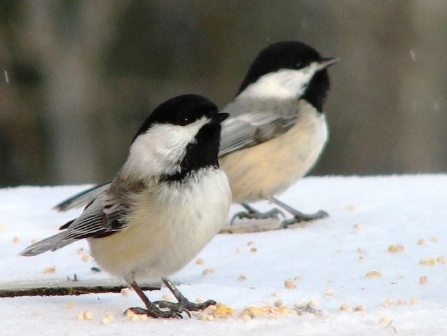 Observation des oiseaux et location de yourte