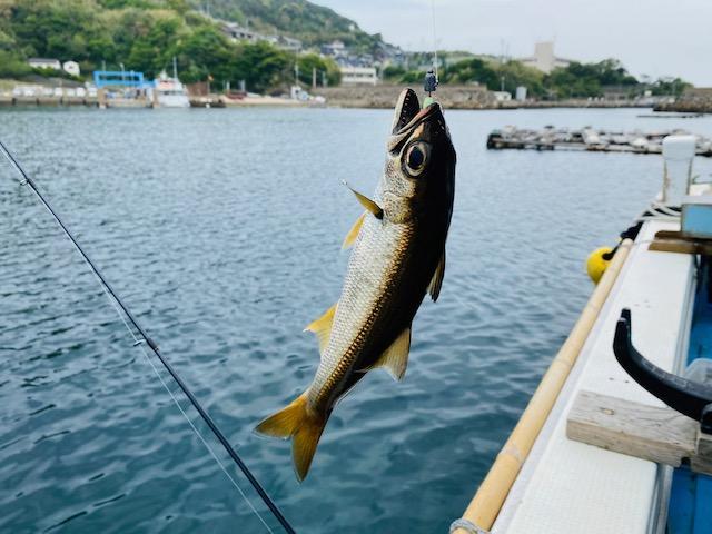 【加唐島】お魚と猫