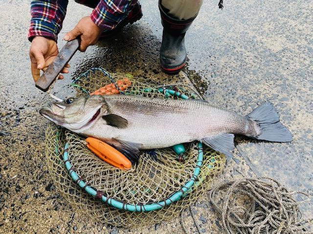 【馬渡島】お魚釣れた?!