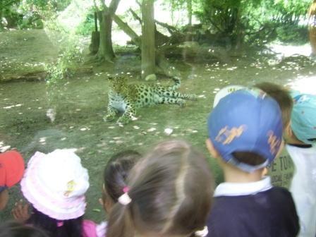 ...un leopardo...