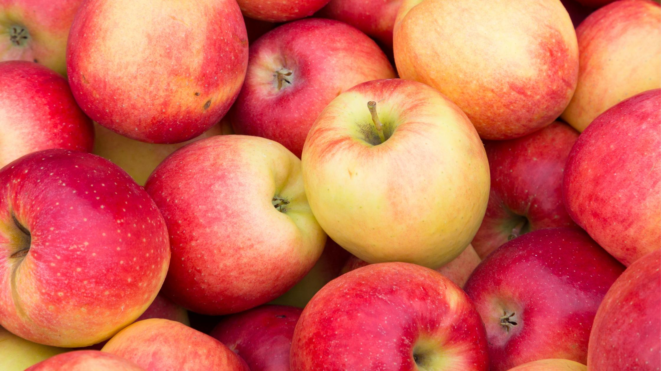 りんご 10月~12月