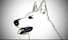 1.Weisse Schäferhunde e.V. Einheit