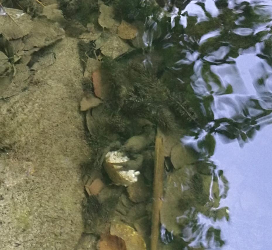 In Bad Helmstedt gibt es Flusskrebse 🦀