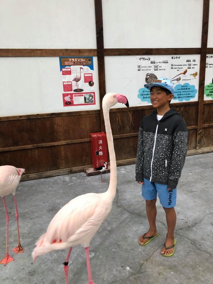 これはオマケ。掛川花鳥園にてフラミンゴと背比べ。