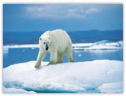 Bild: Klima