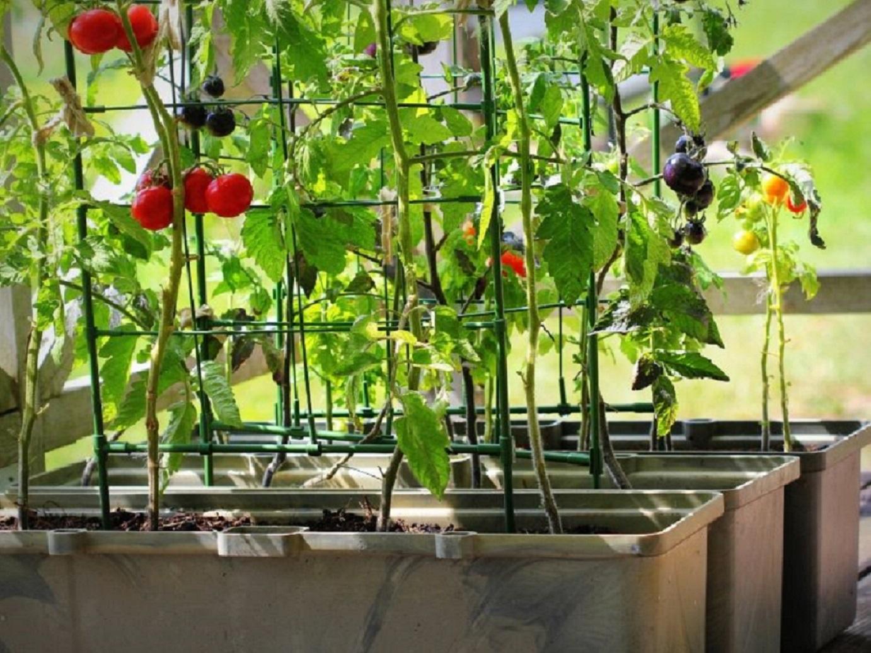 Frutas y verduras que puedes sembrar en macetas en casa