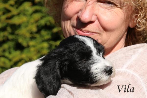 Schapendoeszüchterin Doris Schindler mit Schapendoeswelpe Vila