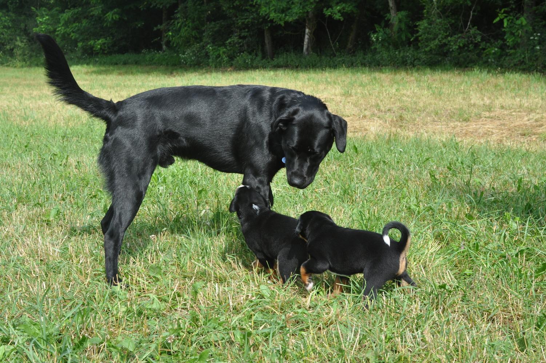 ..... der ist ja noch größer als unsere Mama ....