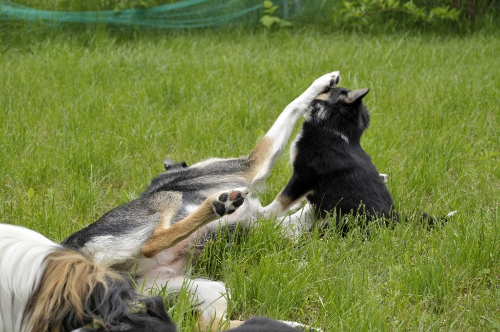 Brax spielt mit Tess