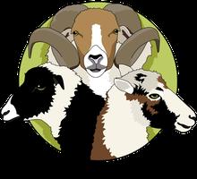 IG Bunte Skudden - Züchtergemeinschaft zur Erhaltung der Vielfalt bei Skudden