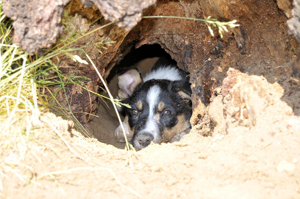 Anton hat die Höhle besetzt