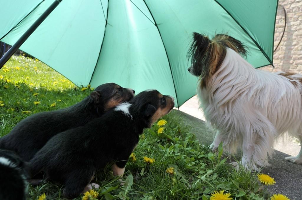Brax und Aidan mit Pepita