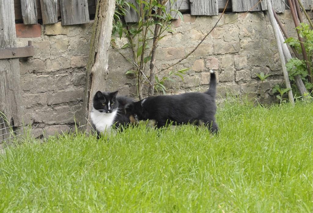 Brax guckt sich die Katze an