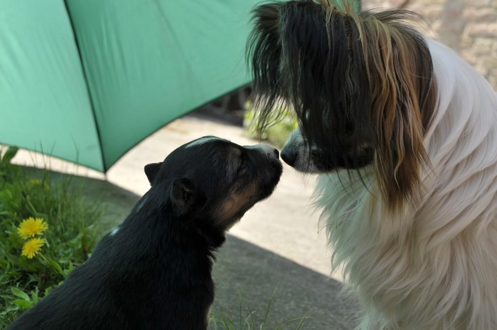 Brax und Pepita