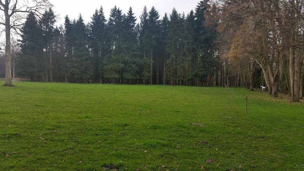 Espace du Campement des chevaux Frisons