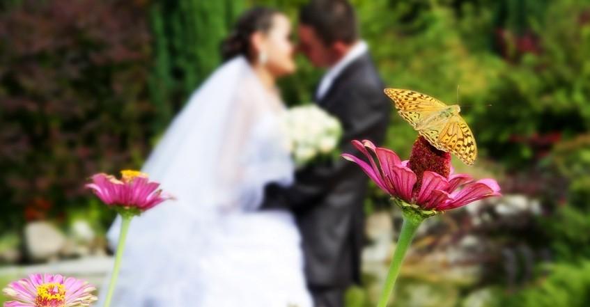 Schmetterling vor küssendem Brautpaar