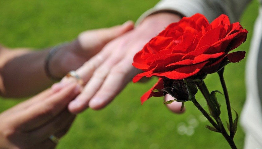 exchange of wedding rings in rosegarden