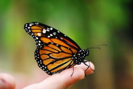 bunter Schmetterling auf einer Hand