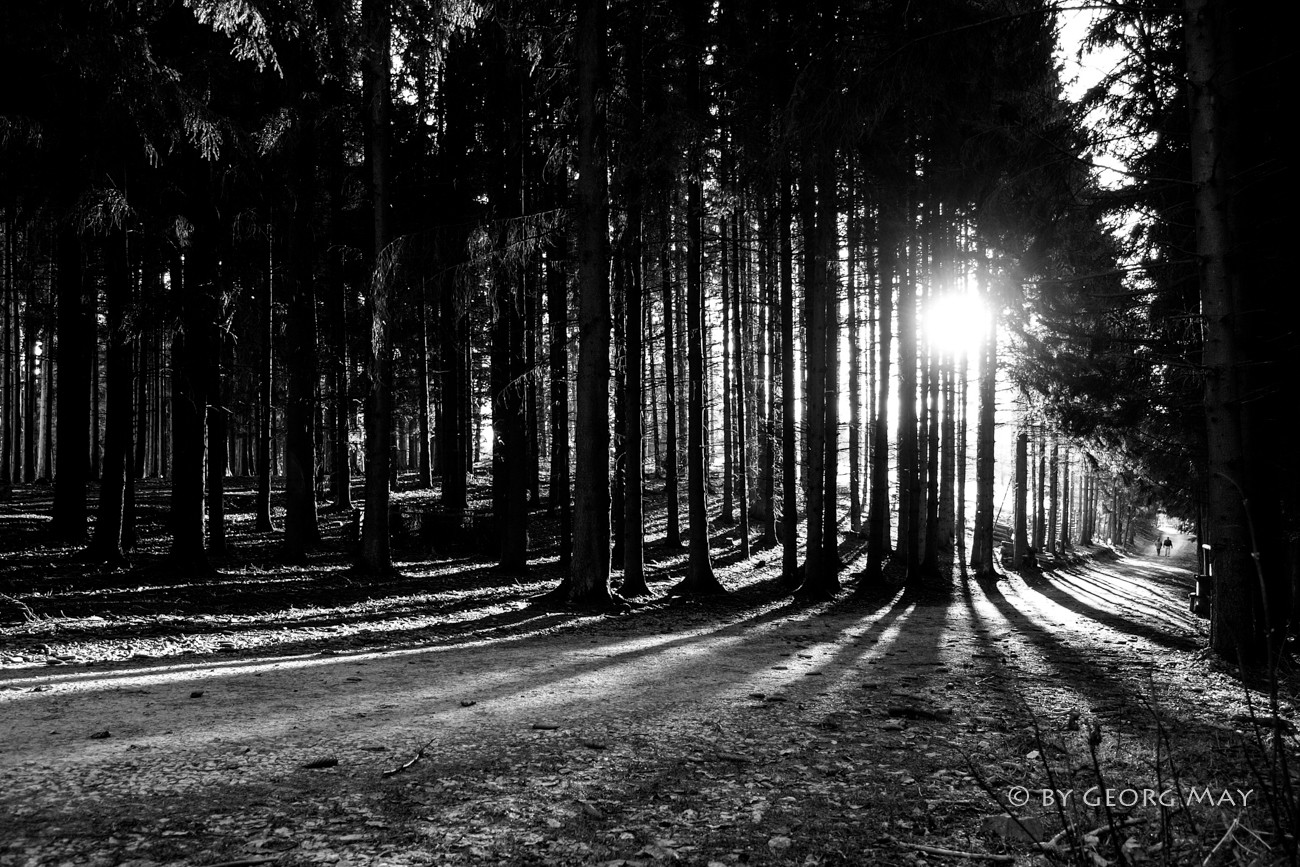 Spätnachmittag im Schmidtheimer Forst