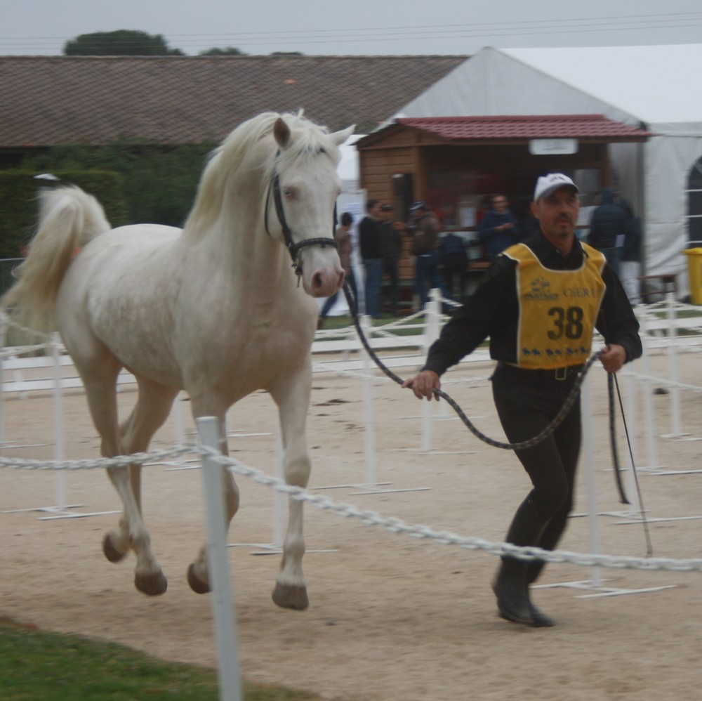Platinov 1 ère course d'endurance à Uzes le 26 avril