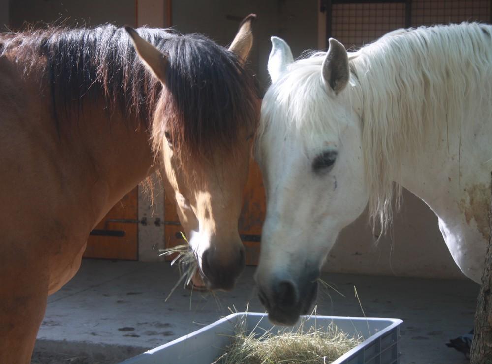 Kamel et sisco