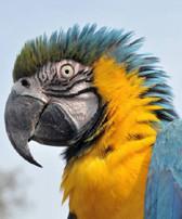 Антитотем рождения - попугай