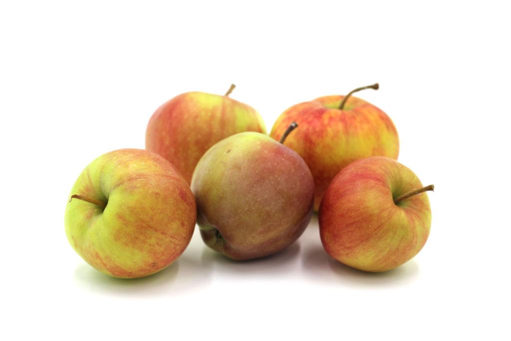 Apfel Sommerregent