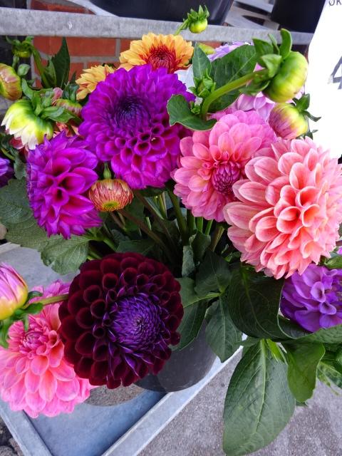 コペンハーゲンで見た色とりどりの花