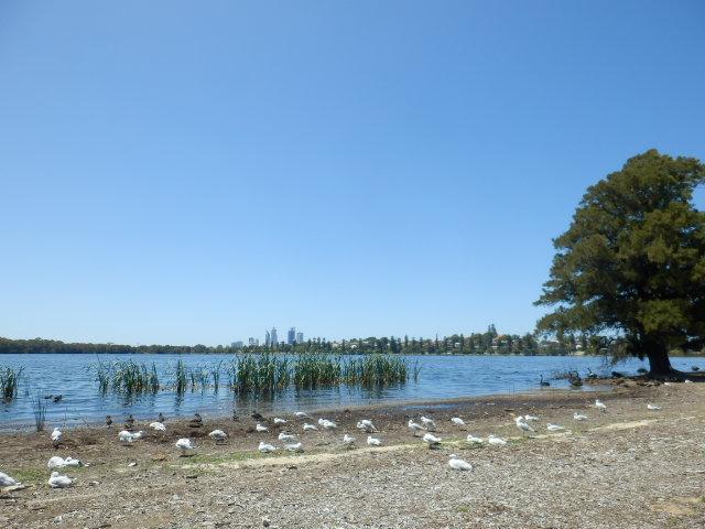 クリスマスに行ったパースのモンガ-湖