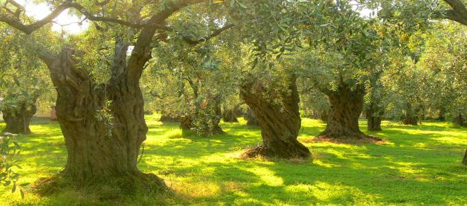 Greek olives | Griekse olijven