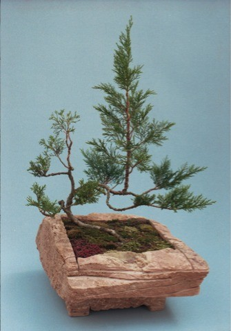 bilder von karl hinterseer teil 1 frankfurter bonsai freunde. Black Bedroom Furniture Sets. Home Design Ideas
