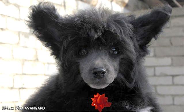Медвеженок Тедди-таким мы его увидели в первый раз!