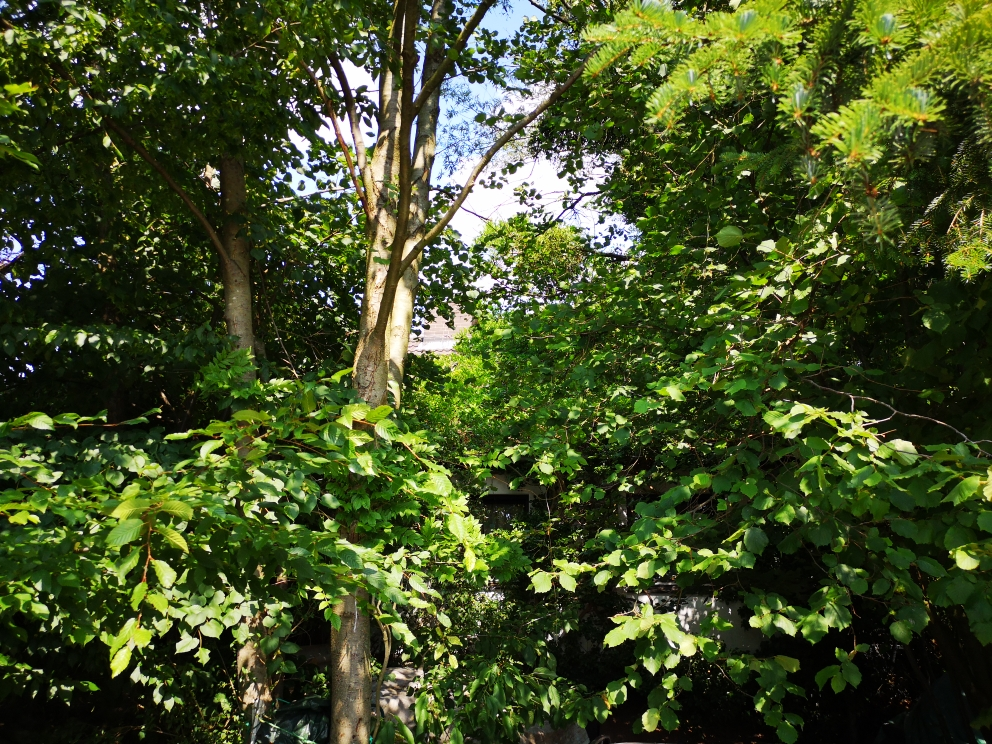Selbst bei den höchsten Sommertemperaturen ist es in diesem Garten sehr angenehm.