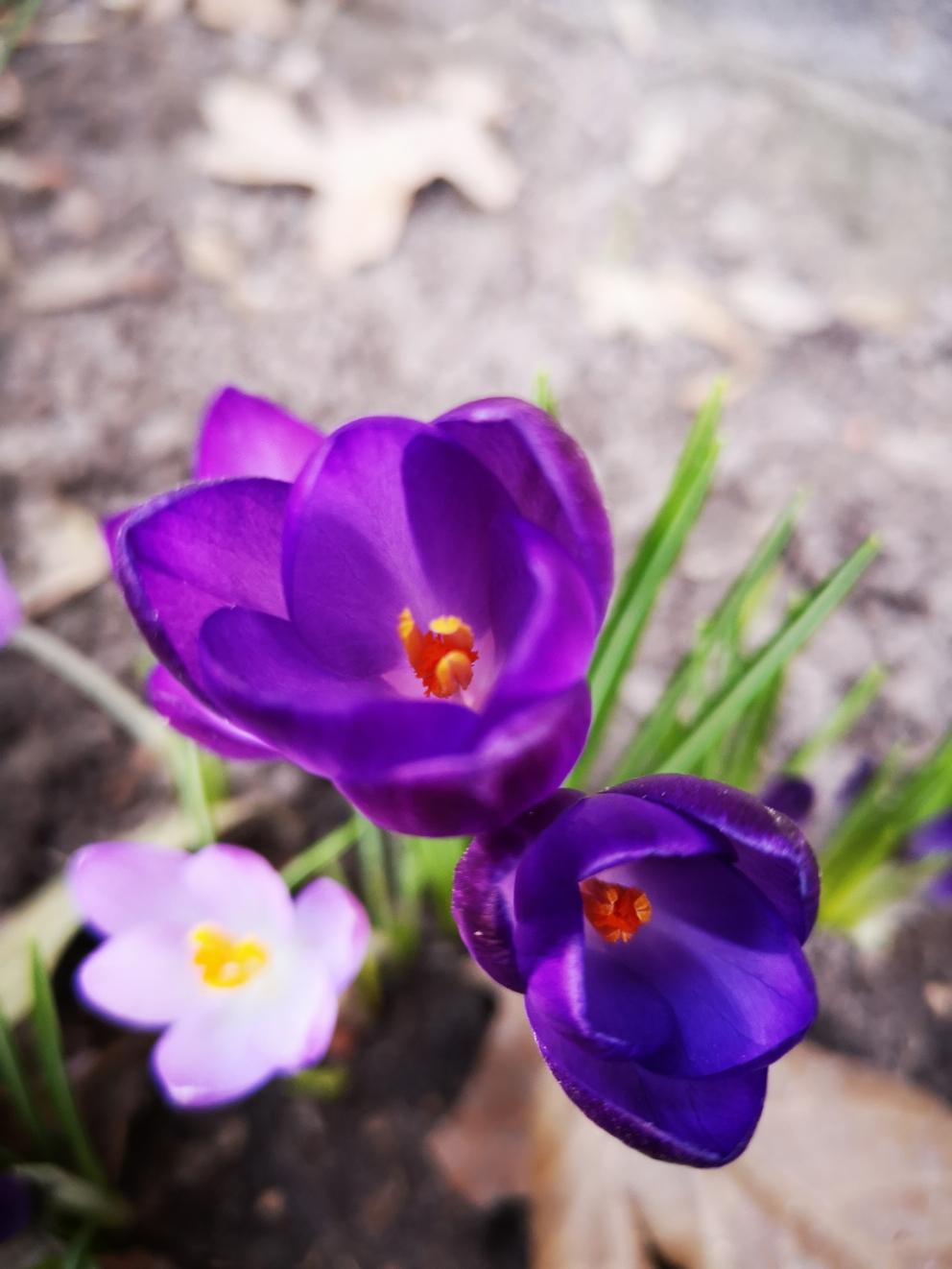 Blumen im eigenen Garten - gibt es etwas schöneres?