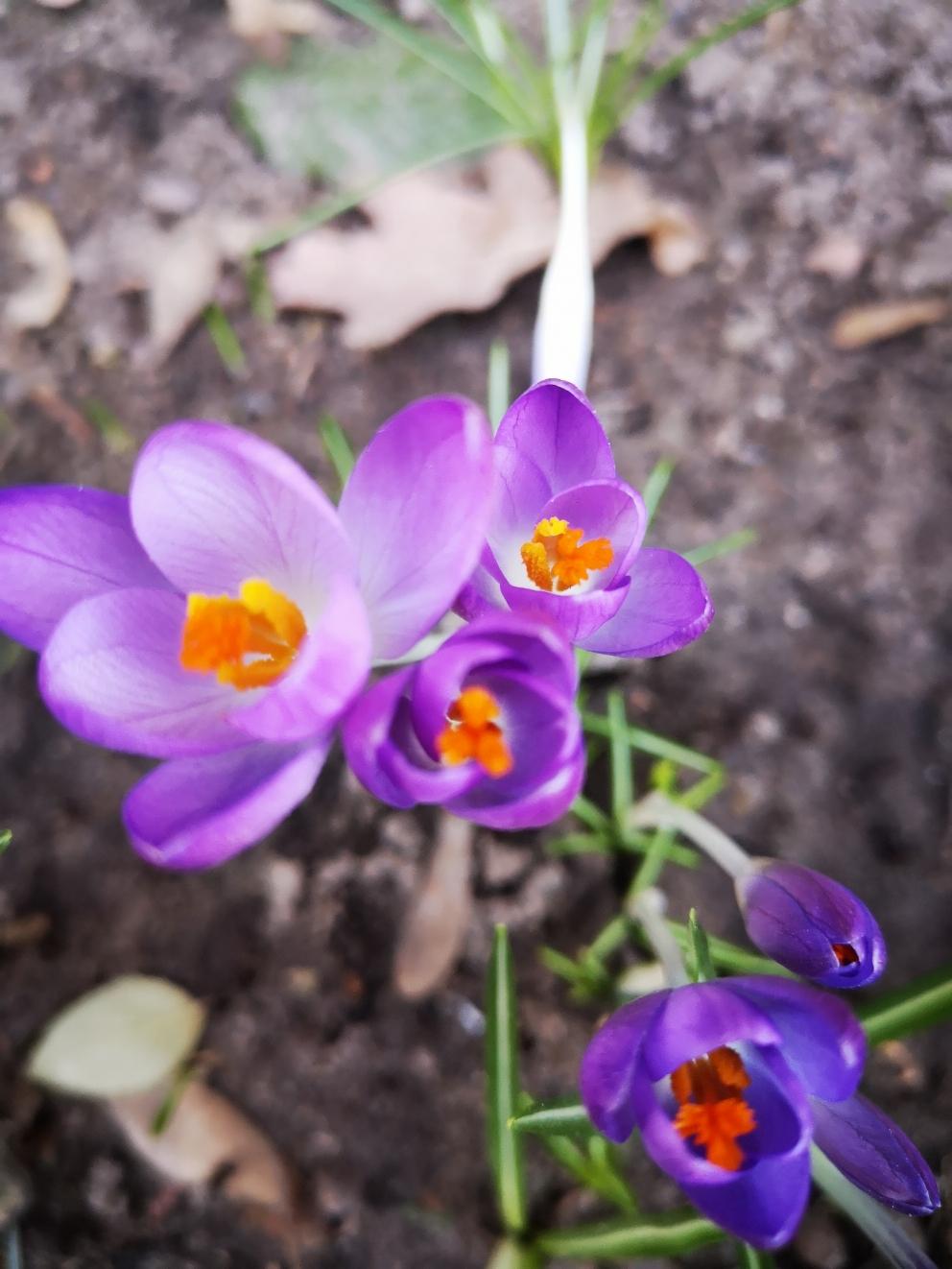 Wenn im Frühjahr wieder alles wächst, die Vögel zwitschern und die Knospen sprießen, dann weiß man, dass der kalte Winter vorüber ist.