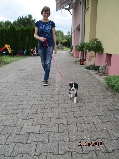 Beim ersten Spaziergang mit der Leine.