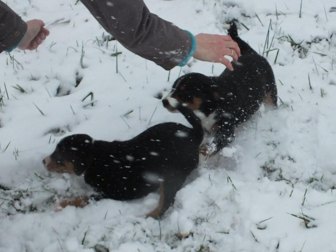 Welpen aus dem Flößerdorf im Schnee