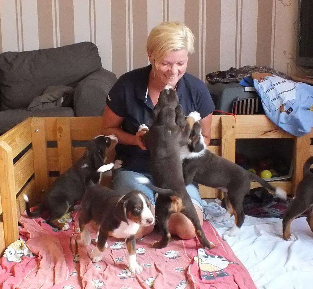 Hundeschule Tanja Fettig bei den Appenzellern von Kirsten Becker
