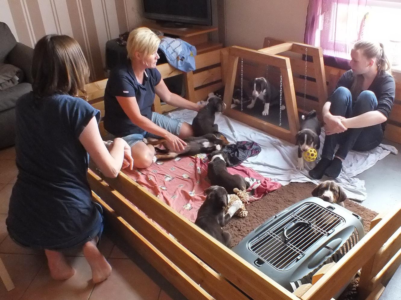 Verhaltenstherapie und Hundeschule Tanja Fettig zu Besuch bei Welpen in Steinmauern