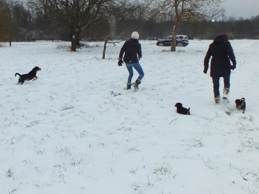 Welpen spielen im Schnee