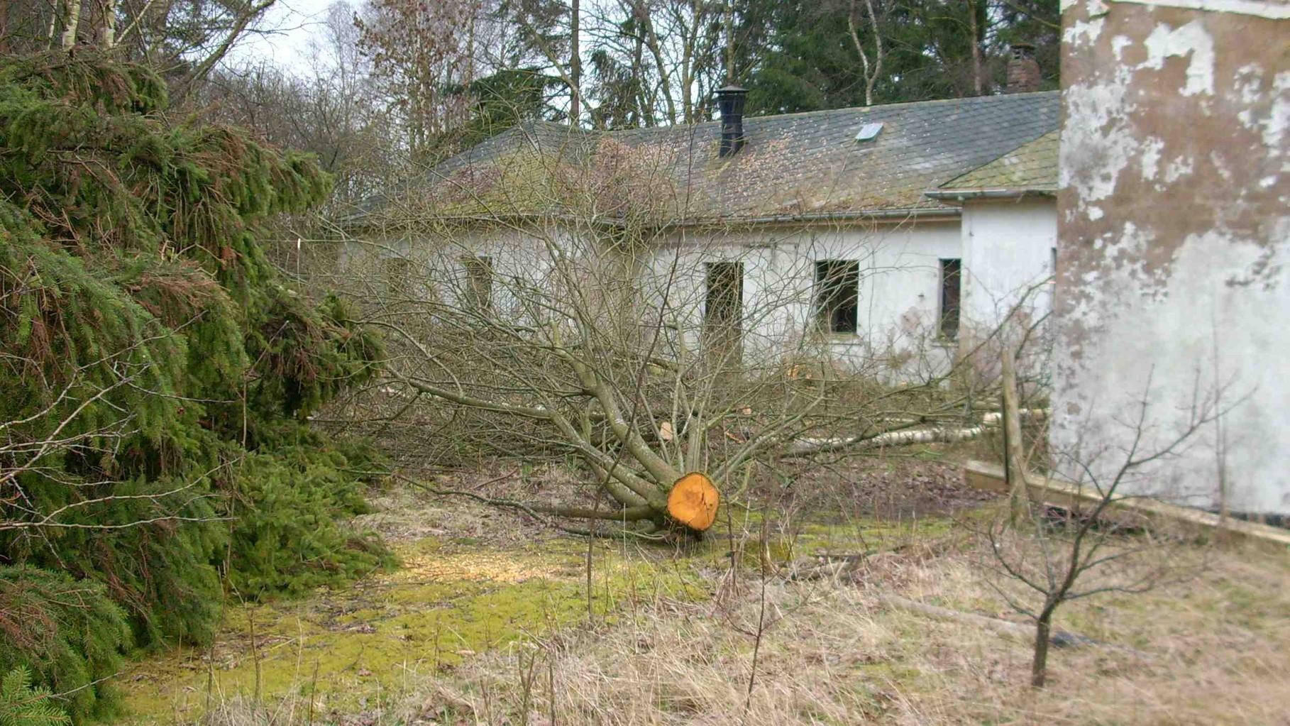 Fällung von Bäumen auf dem Hofgelände