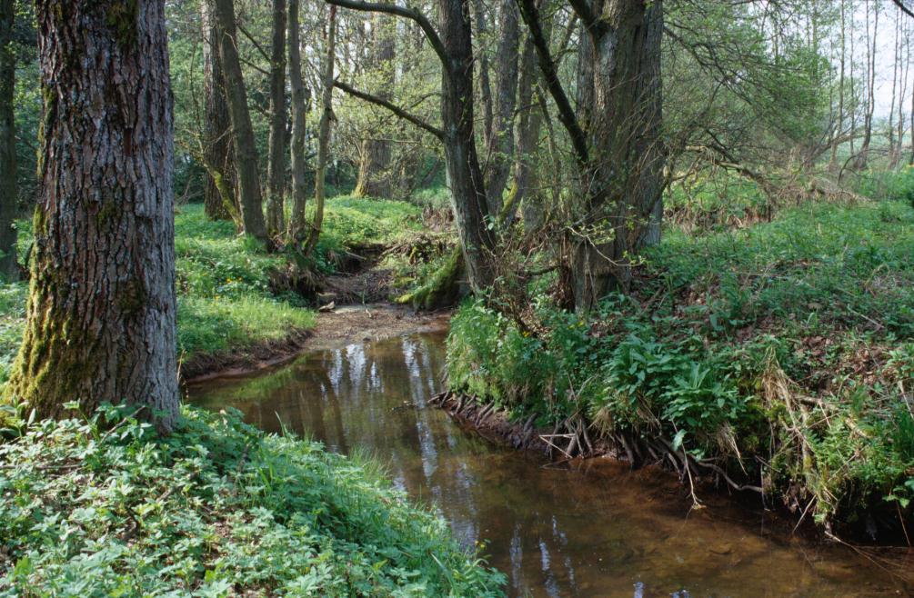 Naturnaher Abschnitt des Oosbaches mit Auwäldchen