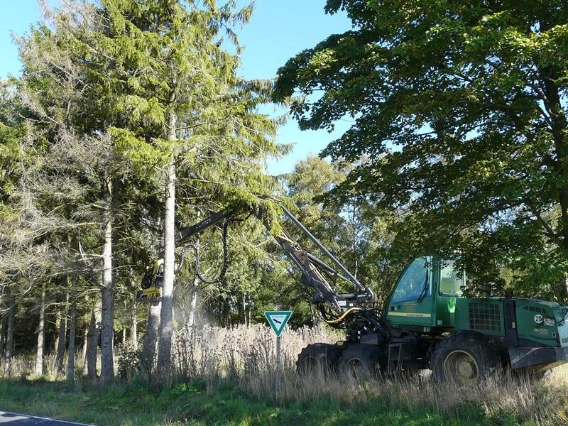 Vollernter greift die Bäume entlang der Straße