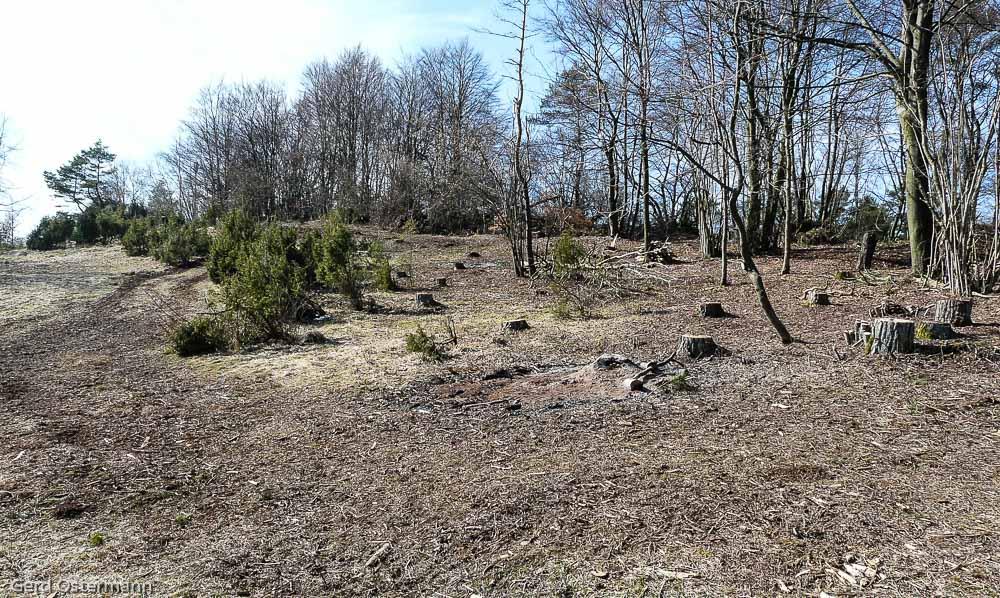 Der von Kiefern und Nadelstreu befreite Waldrand und Kalkmagerrasen.