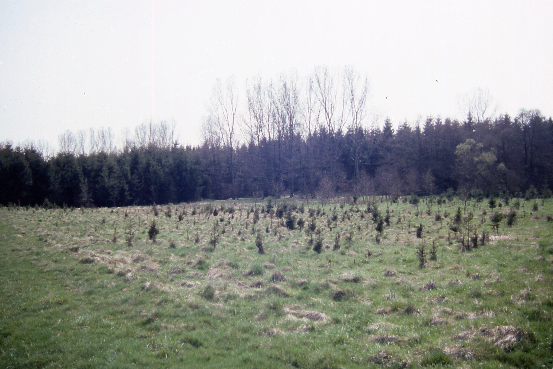 Die Wiese beim Ankauf mit Weihnachtsbaumkultur - 1995