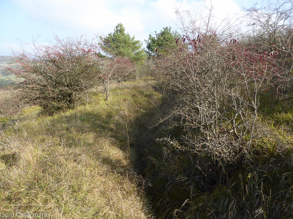 Auch ein ehemaliger Schützengraben aus dem Zweiten Weltkrieg durchzieht das Gebiet, den wir als wichtiges Strukturelement erhalten werden