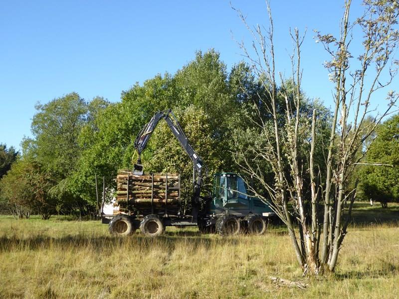 Erntewagen mit Holzabschnitten im NSG