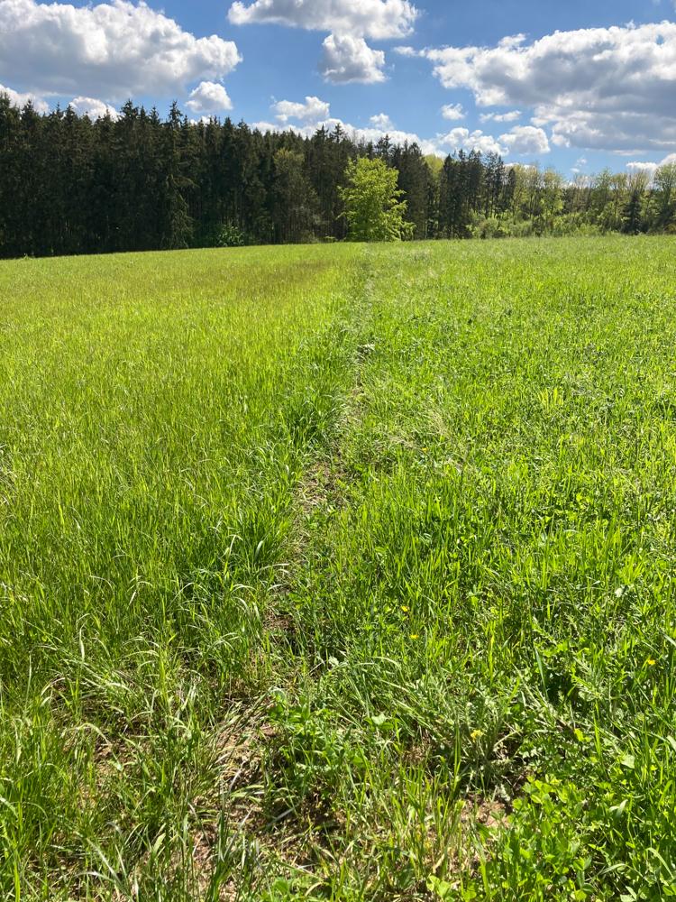 Artenarmes Grasland wird umgewandelt in bunte Blumenwiesen